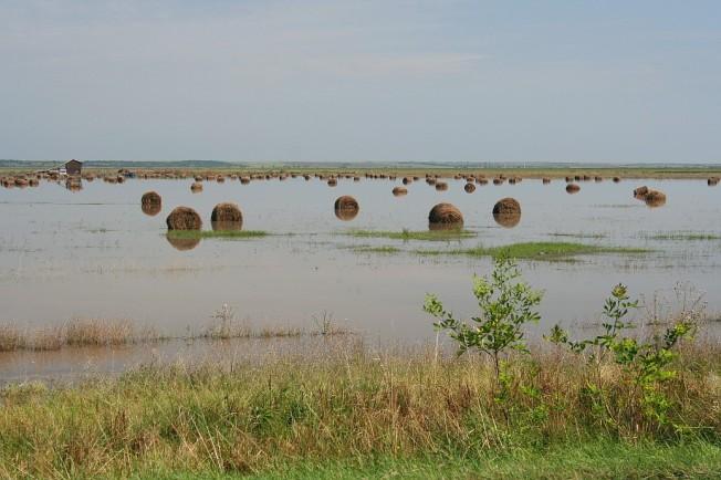 Role de fan inundate la Moravita / Hayrolls in flooded fields near Moravita