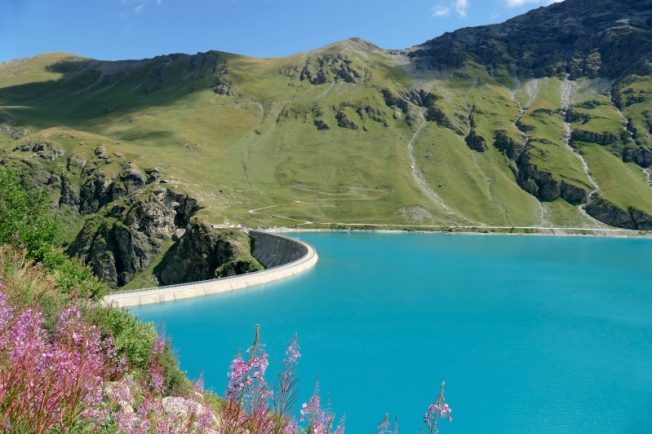 Moiry dam (VS) with typical alpine flora